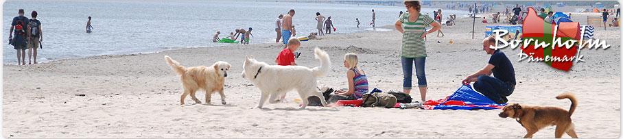 Urlaub mit hund auf bornholm hundegesetz d nemark for Ferien auf juist mit hund